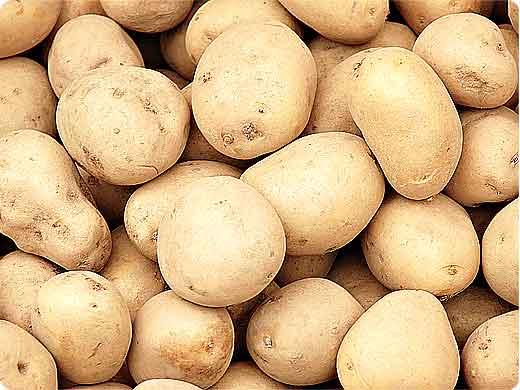 Ziemniaki Plon